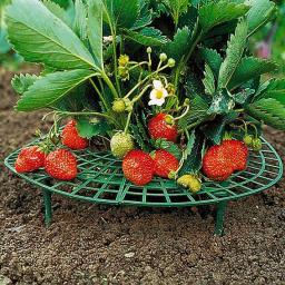 Erdbeer-Reifer, 5 Stück