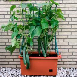Gemüsepflanzer mit Rankgerüst
