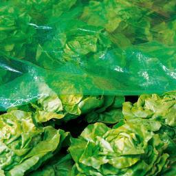 Mitwachsende Schlitzfolie 7,2 x 1,4 m