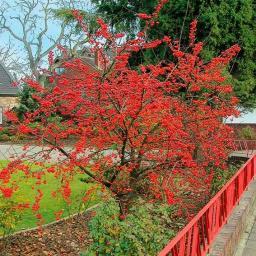 Vogelfutter-Baum