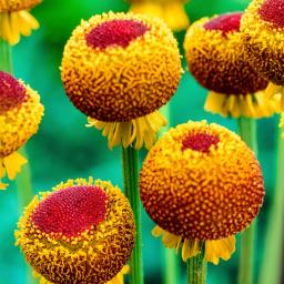 Sonnenbraut Autumn Lollipop