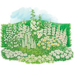 Stauden-Sortiment  Der weiße Garten