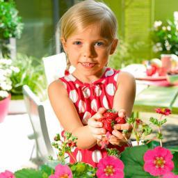 Erdbeerpflanze Kussmund-Erdbeere Toscana®, getopft