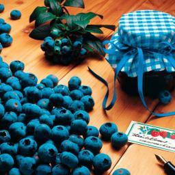 Kultur-Heidelbeere Bluecrop