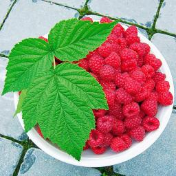 Obst-Sortiment Köstliche Himbeeren