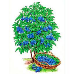Obst-Sortiment Lenzbeeren®