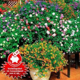 Sommerblumen-Paket Jumbo XXL