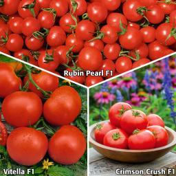Sortiment Gärtner Pötschkes Garten-Tomatenpflanzen