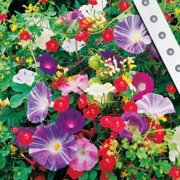 Saatband 6 m Rankende Gärten-Mischung