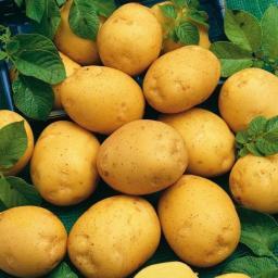 Kartoffel Adretta, 5 kg