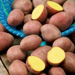 BIO Kartoffel Laura, 10 Stück