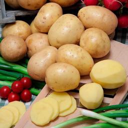 Kartoffel Gala, 2,5 kg