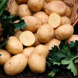 BIO Kartoffel Gunda, 10 Stück