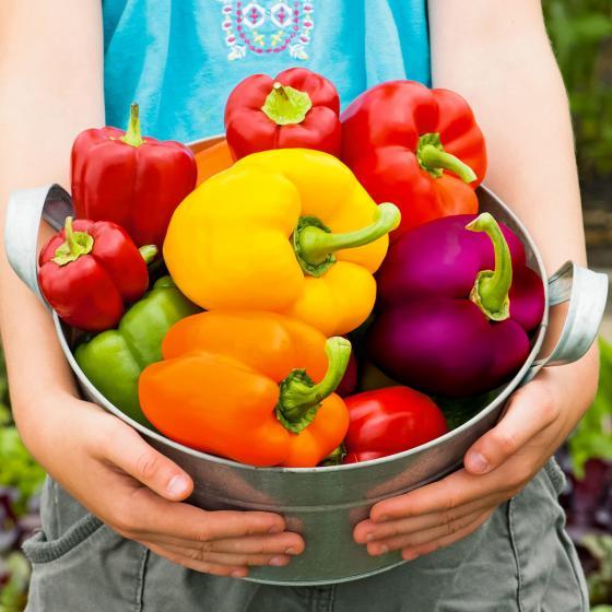 Samenmischung Gemüse-Paprika F1