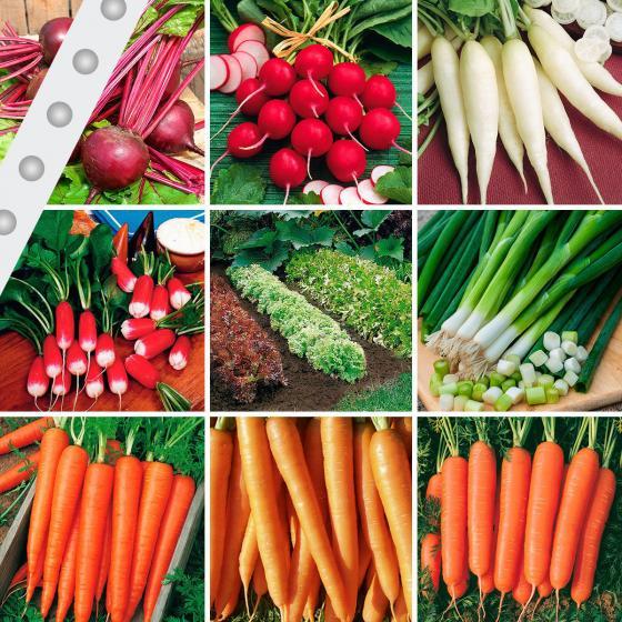 Gemüse-Saatband-Sortiment