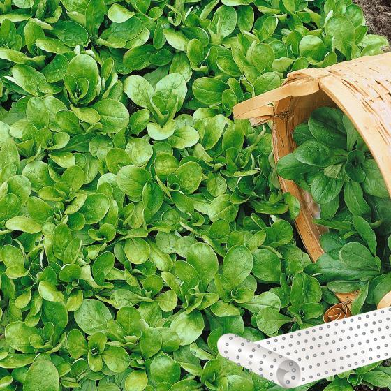 Saatteppich 0,20 x 3 m Feldsalat Granon