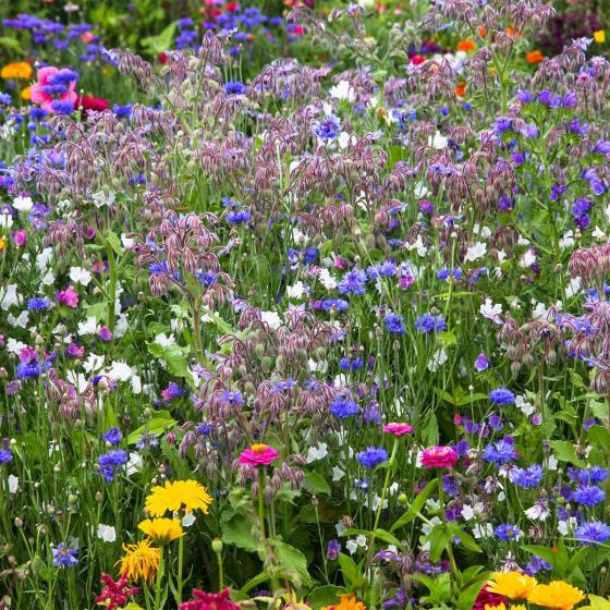 Blumen-Saat-Teppich 0,20 x 3 m, Bunte Bienenweide