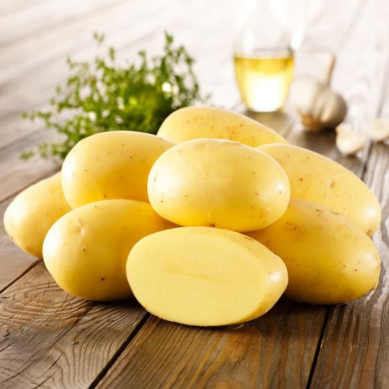 Kartoffel Agria, 10 Stück
