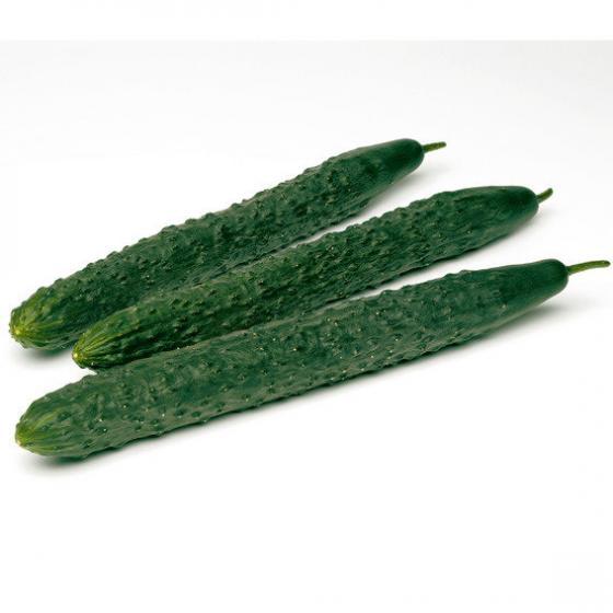 Gurkensamen Burpless Tasty Green F1