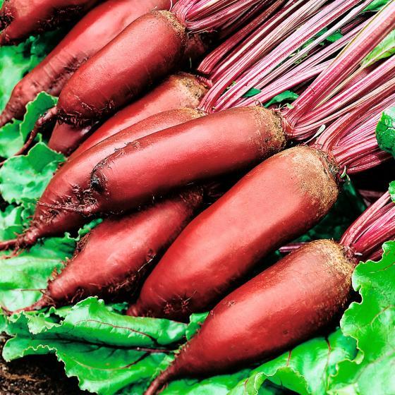 Rote Bete Samen Forono 10 g