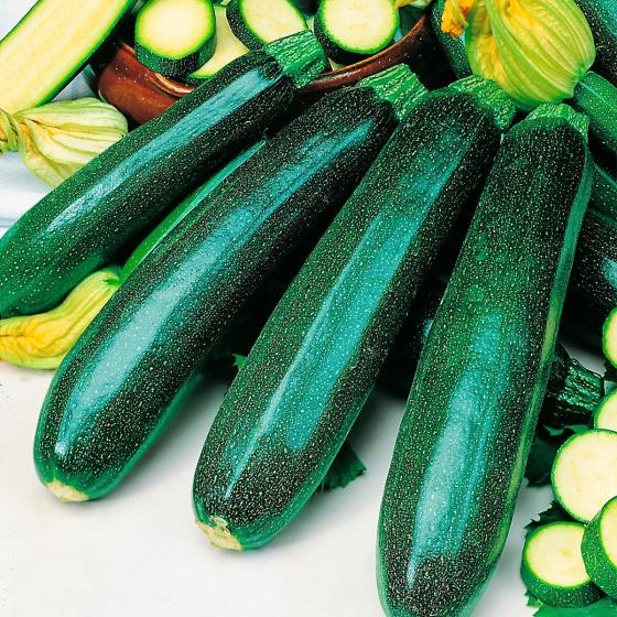 Zucchinipflanzen Mirza F1