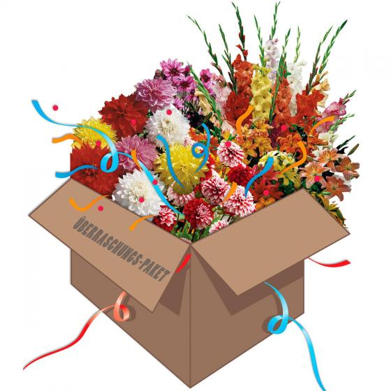 Gärtner Pötschke Überraschungs-Paket Blumenzwiebeln