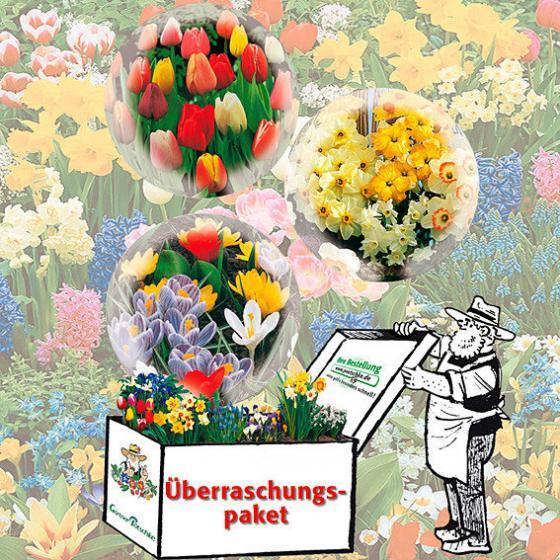 Gärtner Pötschke Blumenzwiebel-Überraschungspaket Maxi