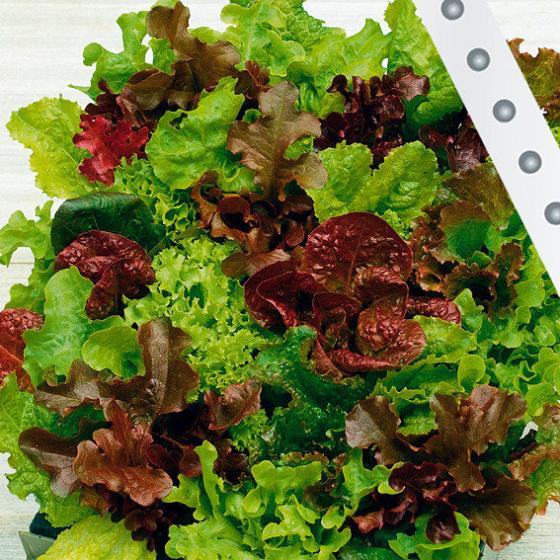 saatband 6 m babyleaf salat online kaufen bei g rtner p tschke. Black Bedroom Furniture Sets. Home Design Ideas