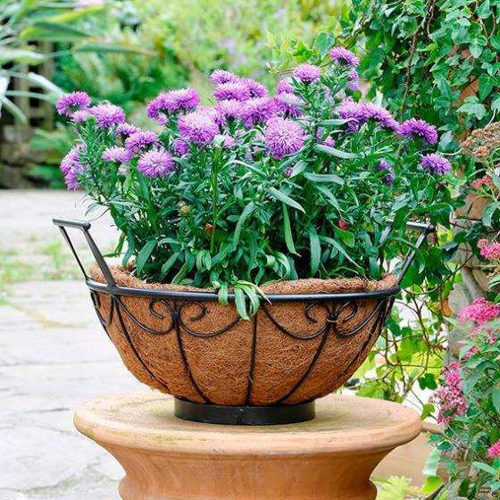 Pflanzschale Blumenglück, inkl. Pflanzeinsatz