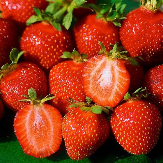 Erdbeere Mieze Schindler, im ca. 9 cm-Topf