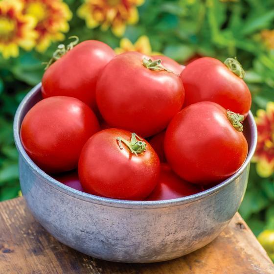 Tomatenpflanze Crimson Crush F1, veredelt
