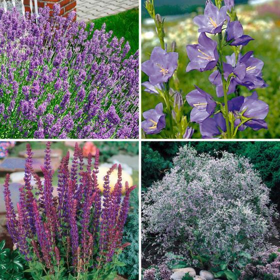 Sortiment Blauer Garten