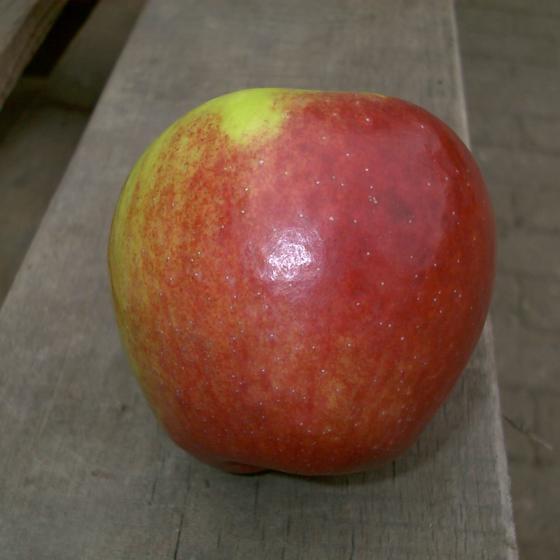 Apfel Retina®, 2-jährig