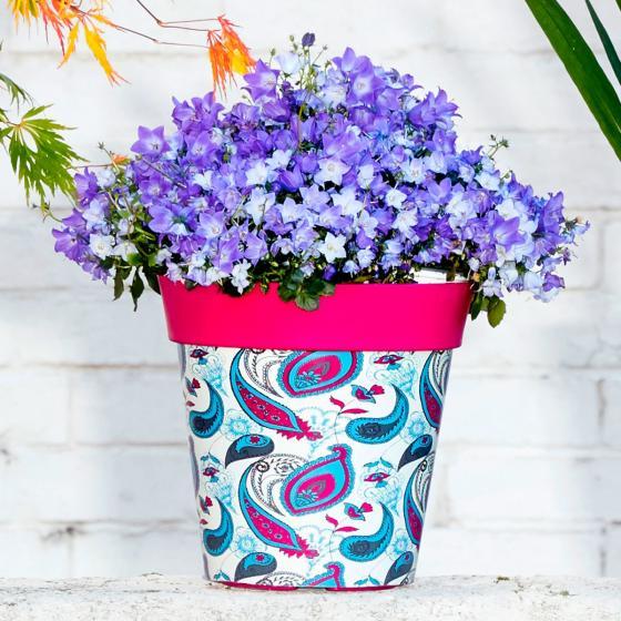 Blumentöpfe, Ornament