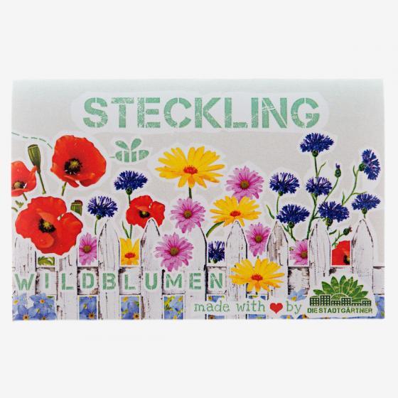 Steckling Wildblumen, 10 Stück