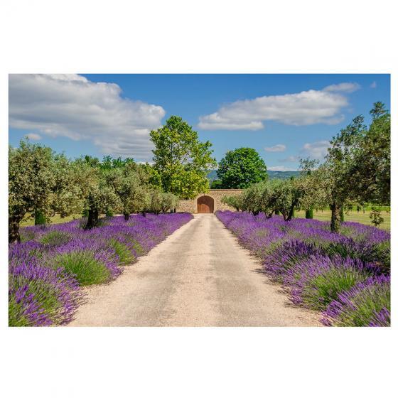 Gartenposter Lavendelweg 210 x 150 cm