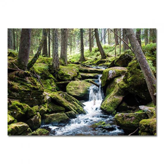 Gartenposter Wald-Idylle 210 x 150 cm