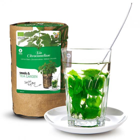 Teegarten BIO Zitronenmelissesamen im RAG-Pflanzbeutel