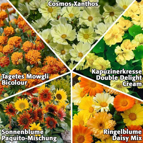 Blumensamen Sortiment Bunt, einfach und schnell