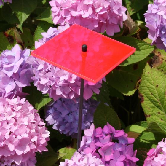 sunart® Acrylglas Lichtfänger, Quadrat, rot