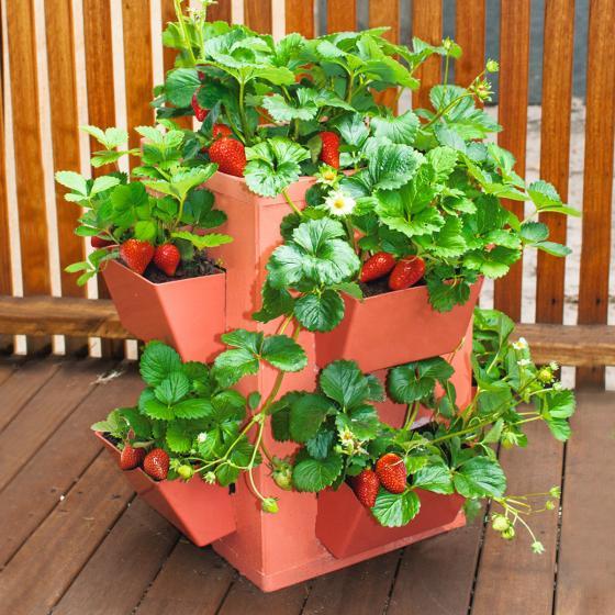 Gemüse- und Pflanzenturm