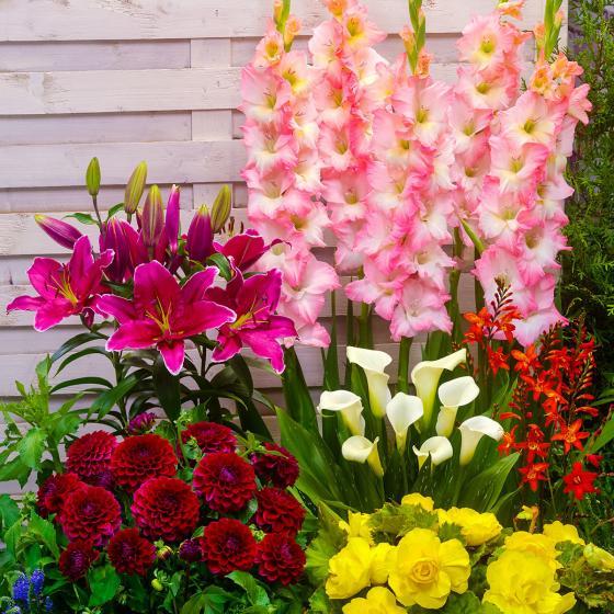 Blumenzwiebel-Sortiment Buntes Sommer-Beet