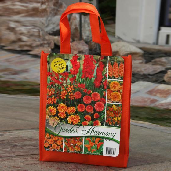 Blumenzwiebel-Sortiment Sommer-Garten in Orange
