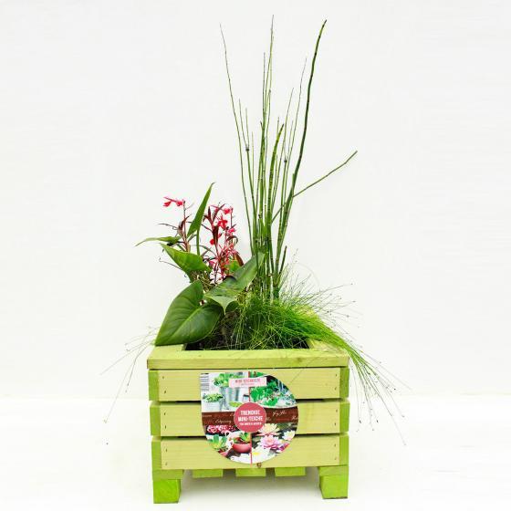 Mini-Teichholzkiste, 45x32x21 cm mit 4 Wasserpflanzen