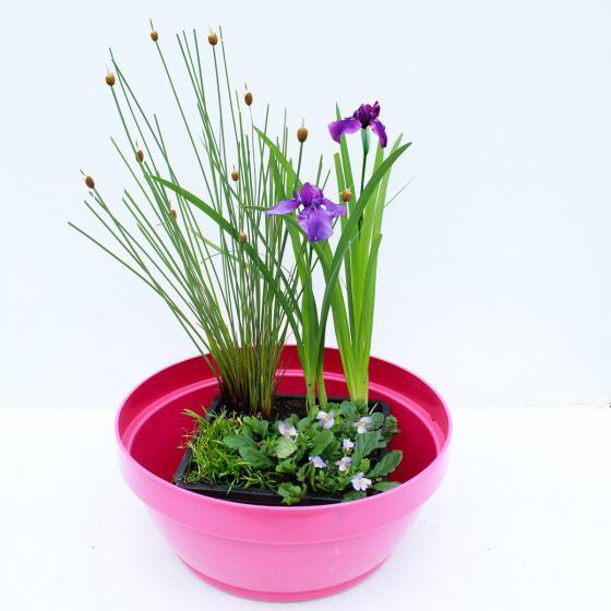 Miniteich Bunte Schale mit Wasserpflanzen