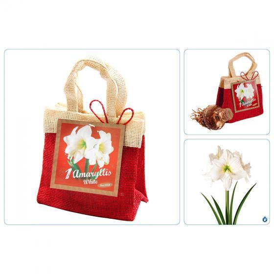 Amaryllis weiß, im Weihnachts-Jutesäckchen