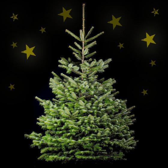 Weihnachtsbaum Nordmanntanne 150-170 cm