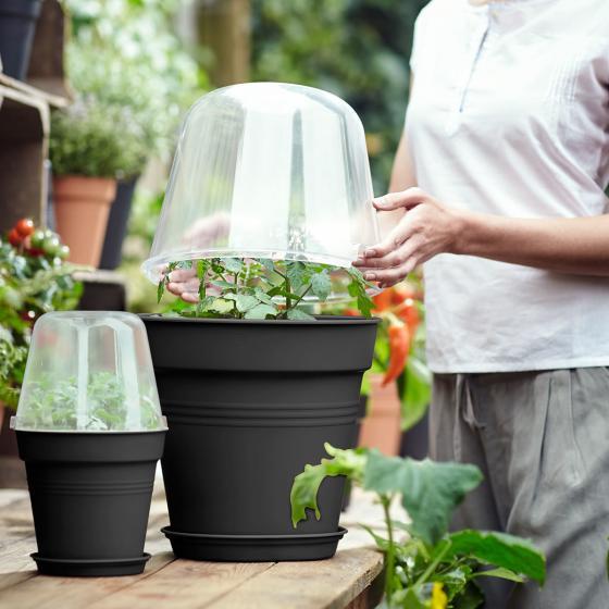 Anzucht-Pflanztopf Green Basics klein