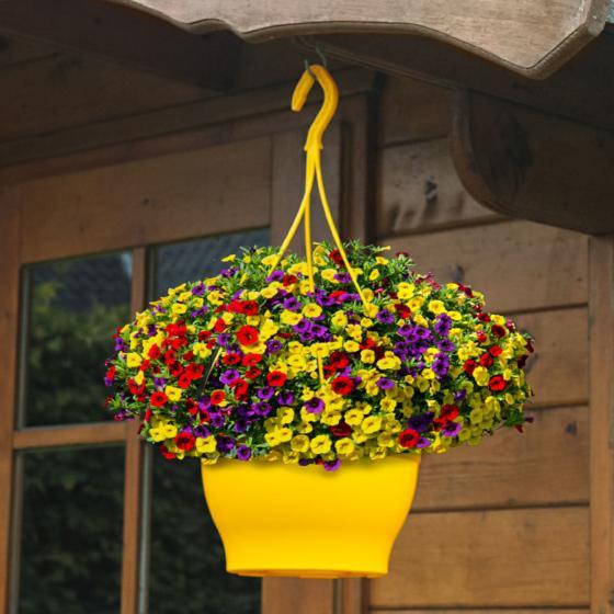 Zauberglöckchen Trixi® Bolero - Blumenampel