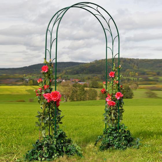 Rosenbogen Liane, oxford-grün